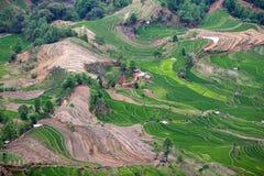 Risaie a terrazze nella contea di Yuanyang, il Yunnan, Cina Immagine Stock