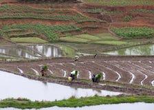 Risaie a terrazze nella contea di Yuanyang, il Yunnan, Cina Immagini Stock