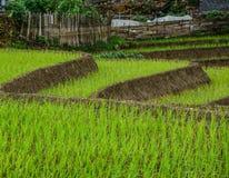 Risaie a terrazze sulla stagione della pioggia nel Vietnam fotografia stock