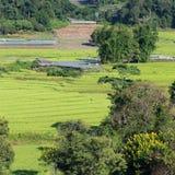 Risaie verdi del terrazzo di agricoltura Immagini Stock Libere da Diritti