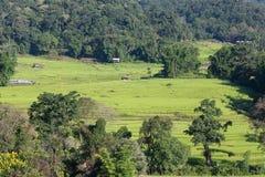 Risaie verdi del terrazzo di agricoltura Fotografia Stock Libera da Diritti