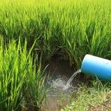 Risaie verdi del terrazzo di agricoltura della stagione Immagine Stock