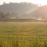 Risaie verdi della risaia di agricoltura Fotografia Stock Libera da Diritti