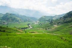 Risaie verdi e riso di agricoltura a terrazze sulla montagna Fotografia Stock Libera da Diritti