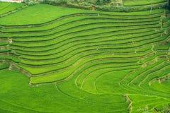 Risaie verdi e riso di agricoltura a terrazze sulla montagna Fotografie Stock Libere da Diritti