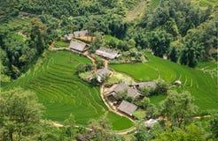 Risaie verdi e riso di agricoltura a terrazze sulla montagna Immagine Stock