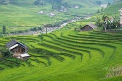 Risaie verdi e riso di agricoltura a terrazze sulla montagna Fotografie Stock
