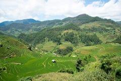 Risaie verdi e riso di agricoltura a terrazze sulla montagna Fotografia Stock