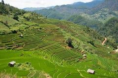 Risaie verdi e riso di agricoltura a terrazze sulla montagna Immagini Stock Libere da Diritti