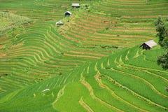 Risaie verdi e riso di agricoltura a terrazze sulla montagna Immagine Stock Libera da Diritti