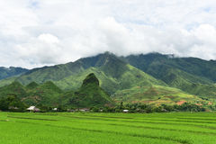 Risaie verdi e riso di agricoltura a terrazze sulla montagna Immagini Stock
