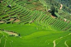 Risaie verdi e riso di agricoltura a terrazze sulla montagna alla S Fotografia Stock Libera da Diritti