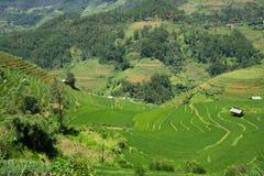 Risaie verdi e riso di agricoltura a terrazze sulla montagna alla S Fotografie Stock