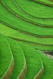 Risaie verdi e riso di agricoltura a terrazze sulla montagna alla S Fotografia Stock