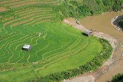 Risaie verdi e riso di agricoltura a terrazze sulla montagna alla S Immagini Stock Libere da Diritti