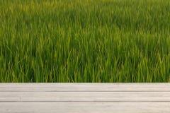 Risaie verdi e tavola di legno per i prodotti dell'esposizione fotografia stock