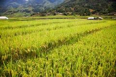 risaie verdi nel villaggio di Phin di tum, PA del Sa, Vietnam Fotografie Stock