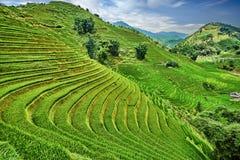 Risaie verdi nelle montagne del Vietnam Immagini Stock