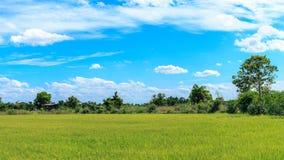 Risaie verdi Tailandia Immagini Stock Libere da Diritti