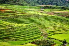 risaie verdi a terrazze intorno a PA del Sa, Vietnam Fotografia Stock Libera da Diritti