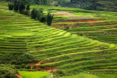 risaie verdi a terrazze intorno a PA del Sa, Vietnam Immagini Stock Libere da Diritti