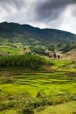 risaie verdi a terrazze nel villaggio di mA Tra, PA del Sa, Vietnam Fotografia Stock Libera da Diritti