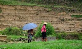 Risbönder som arbetar på ris, terrasserar fält i Sapa, Vietnam royaltyfri foto
