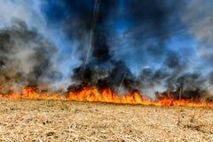 Riscaldamento globale Campo agricolo bruciante, inquinamento del fumo Immagini Stock