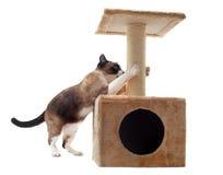Riscando o gato Imagem de Stock Royalty Free
