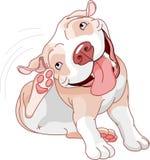 Risco bonito do pitbull ilustração do vetor