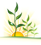Rise. Sunrise and plants, vector illustration Stock Photography