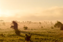 Rise of mist on the savanna and mountains Stock Photos