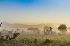 Rise of mist on the savanna Stock Photography