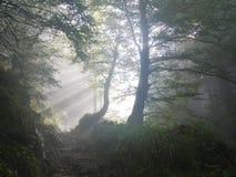 Rise, Morning, Fog, Sunbeam Royalty Free Stock Photo