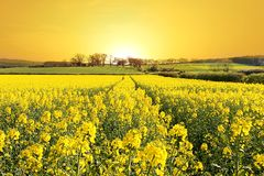 Rise and Shine. Stunning Sunrise over Farm and Canola field in Northumberland, England. Taken with wide angle Lens stock photo