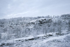 The rise of the snow-covered hill. Covered with forest Royalty Free Stock Photography