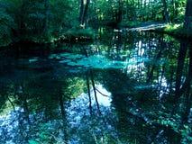 Riserva Blue Springs in Tomaszow Mazowiecki, Polonia fotografie stock libere da diritti