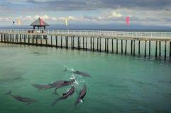 Riserva del delfino dell'isolotto di Ozamis Fotografia Stock Libera da Diritti