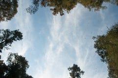 Riserva di biosfera della farfalla di monarca, Michoacan (Messico) immagini stock