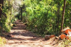 Riserva di biosfera della farfalla di monarca, Michoacan, Messico immagini stock libere da diritti