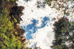 Riserva di biosfera della farfalla di monarca, Michoacan, Messico fotografia stock libera da diritti