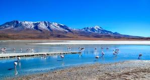 Riserva di Eduardo Avaroa Andean Fauna National dei fenicotteri, Bolivia Fotografia Stock Libera da Diritti