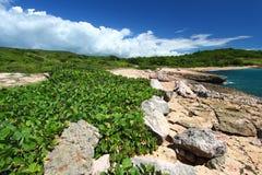 Riserva di Guanica - Porto Rico Fotografie Stock