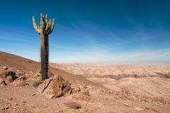 Riserva di pampa Galeras vicino a Nazca, Perù Fotografia Stock