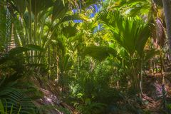 Riserva naturale affettuosa di Ferdinand, Seychelles immagine stock