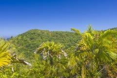 Riserva naturale affettuosa di Ferdinand, Seychelles immagini stock libere da diritti