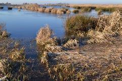 Riserva naturale dell'area umida il Jonker verde. Fotografie Stock