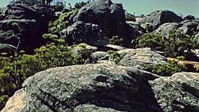 Riserva naturale della montagna della Tabella di Cape Town video d archivio