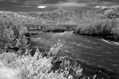 Riserva naturale di Biospheric dello stato di Altai, fiume di Chuia, Russia Fotografia Stock Libera da Diritti