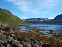 Riserva naturale di Hornstrandir, Islanda Fotografia Stock Libera da Diritti